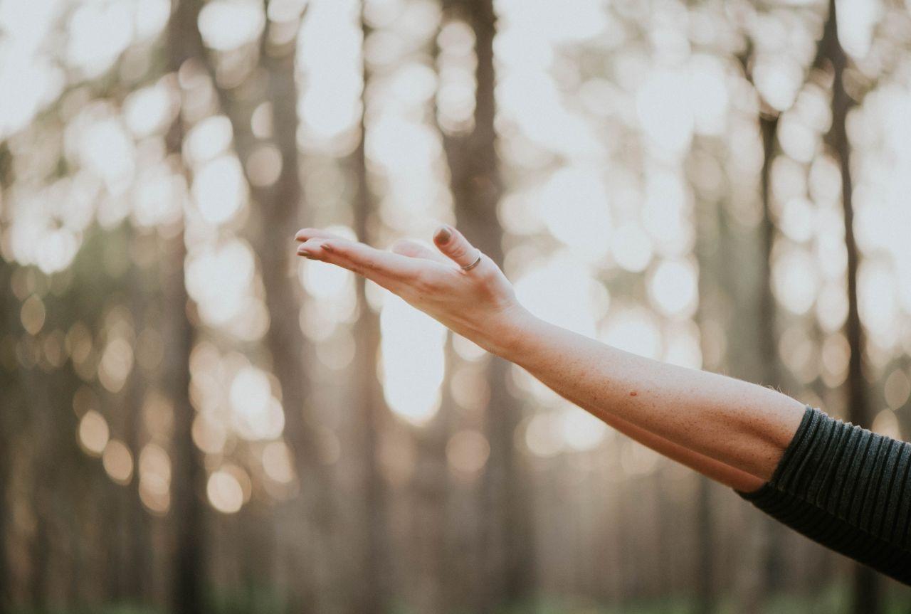 Un bras tendu tourné vers le ciel, main ouverte, dans une forêt.